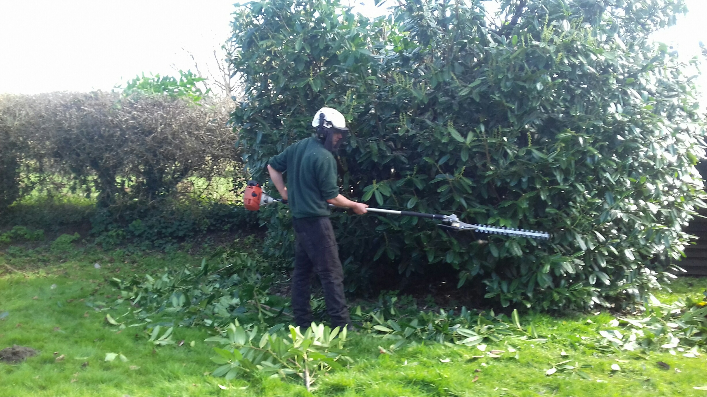 Tree surgery right cut tree garden services for Tree and garden services